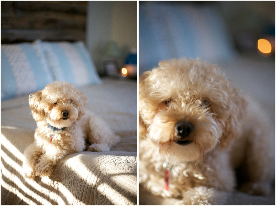 cute pet photography, raleigh nc lifestyle photographers