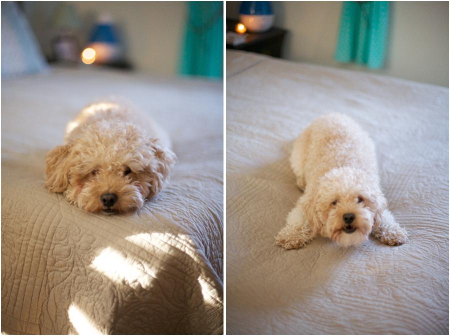 best pet photographers, raleigh nc