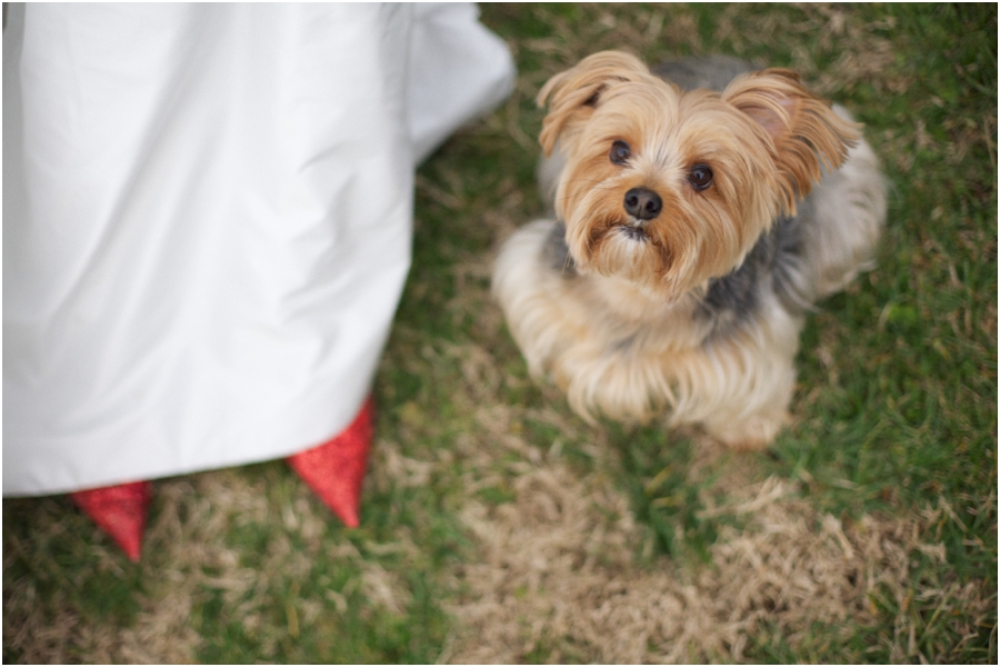 wizard of oz inspired wedding photography, little dog next to bride wearing red sequined toms
