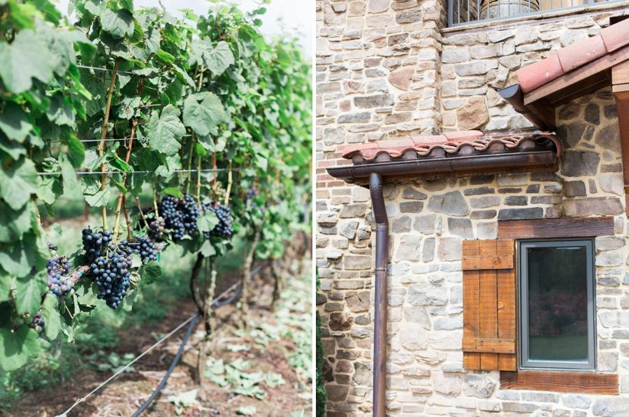chianti grapes, raffaldini vineyard wedding photographer