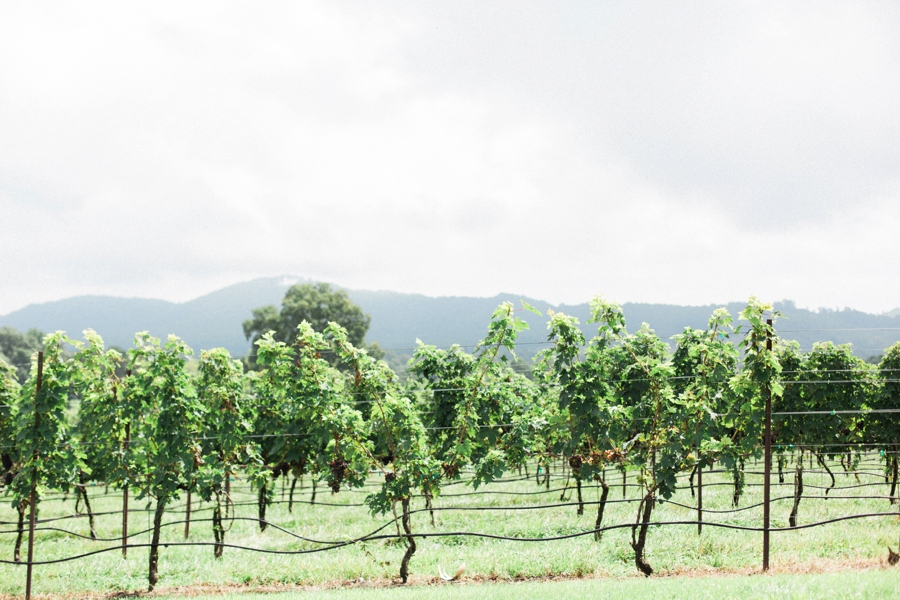 raffaldini vineyards fine art photographer