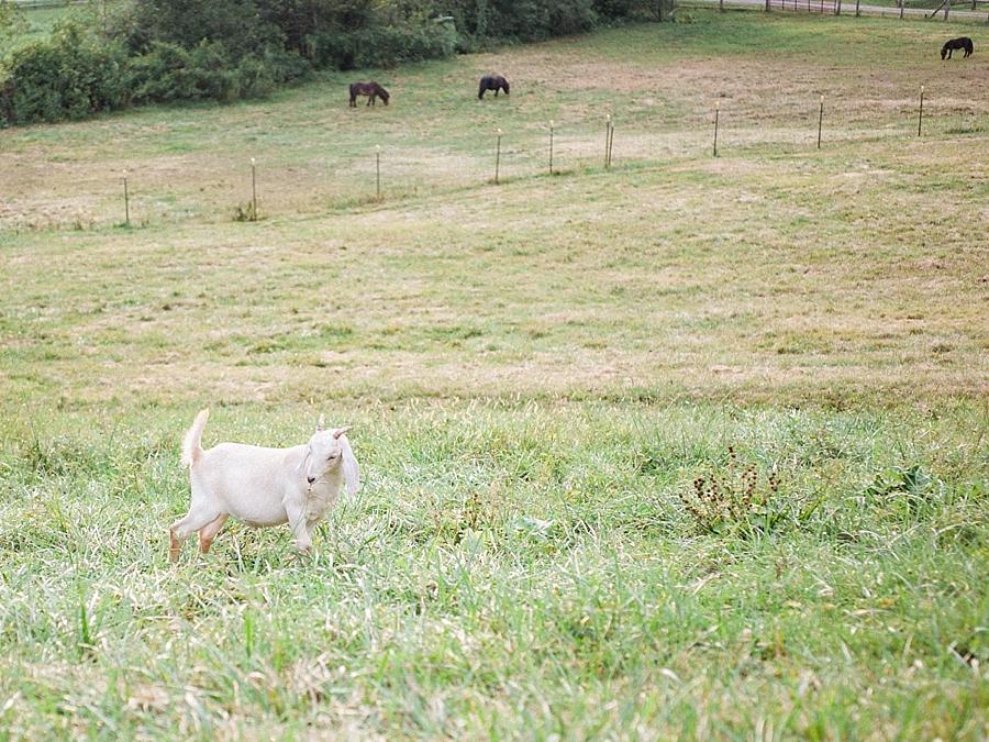 Claxton Farm Fine Art Film Wedding Photography_0050
